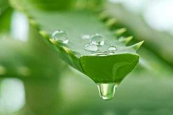 Example of how to make aloe juice