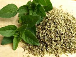 Learn about the medicinal properties of oregano
