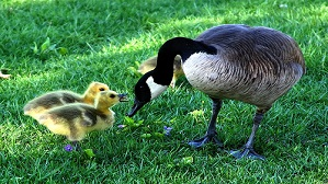 Facts about motherhood in animals