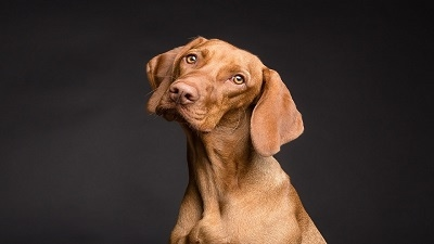 Dogs understand everything they're told, Science says