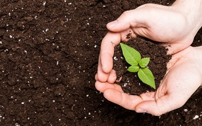 Example of how to make organic fertilizer
